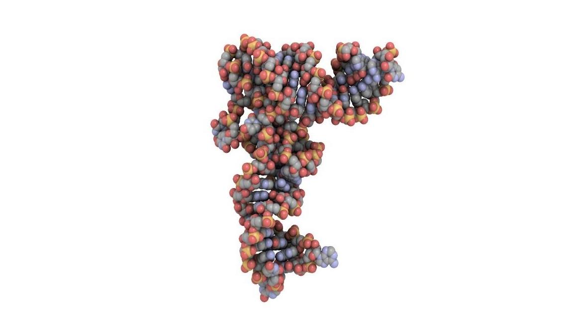 Biochemistry Molecule